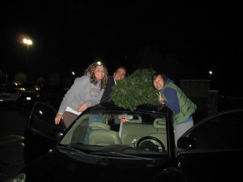 tree-with-car.jpg